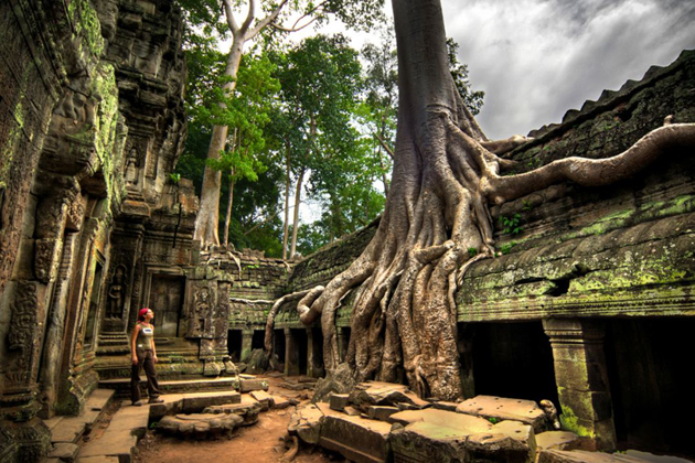 Ancient Banyan tree rooted on temples of Ta Prohm