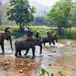 Chiang Mai - Elephant Safari Thailand