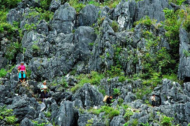 dong van rock plateau in ha giang