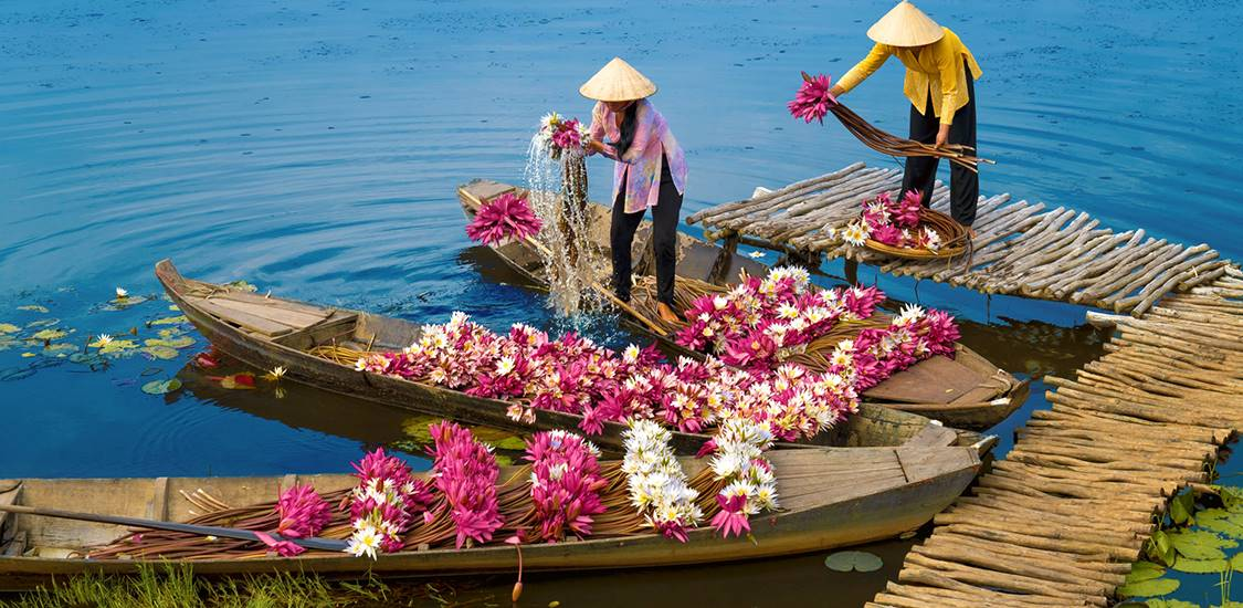 harvest water lily vietnam vacation