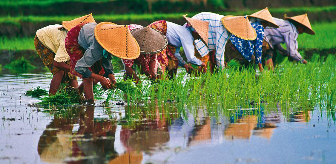 interesting facts of vietnam vietnam vacation packages