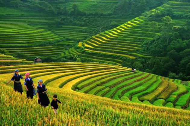 Rice terraces in Cat Cat Village