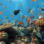 Scuba Diving and Snorkeling in Hoi An