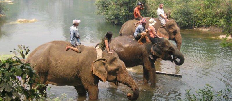dalat elephant riding tour 1 day