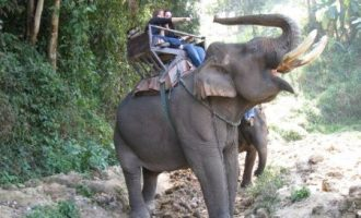 Dalat Elephant Riding Tour – 1 Day