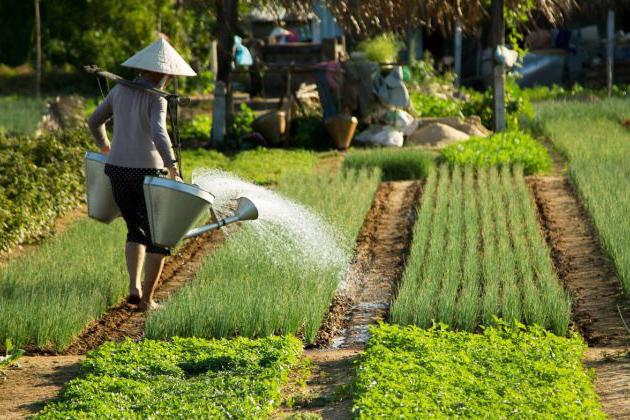 Tra Que Village Farming