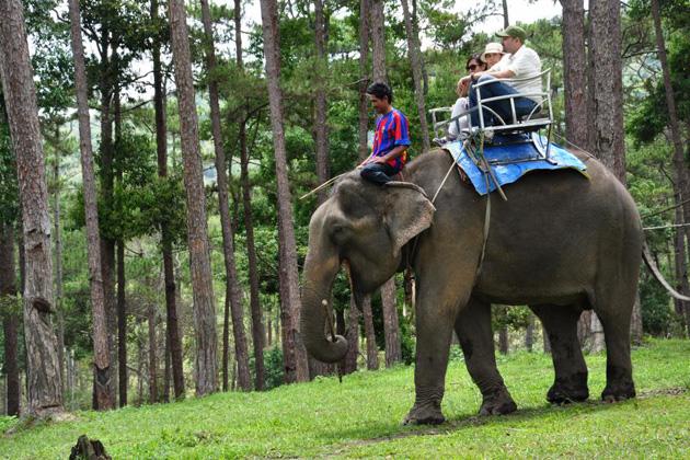 Elephant riding in Dalat