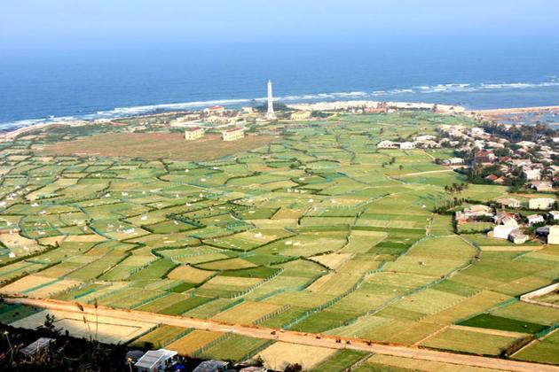 garlic fields in ly son island