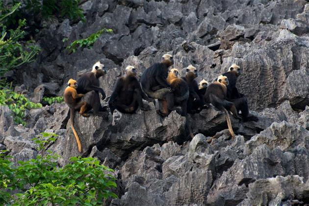 animals in cat ba national park vietnam vacation