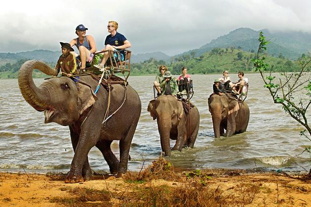 elephant ride dalat tours