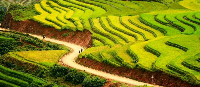 visit the rice terraces in hanoi halong sapa tour 6 days