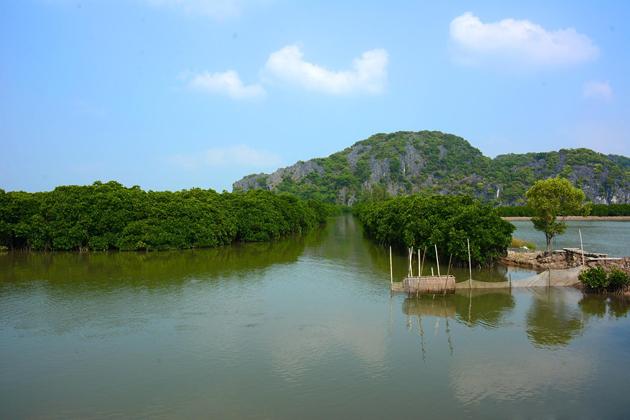 Phu long mangrove forest