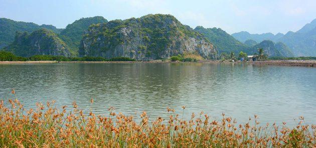 Phu Long Mangroves – A New Natural Wonder in Vietnam