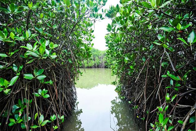 phu long mangroves forest hai phong