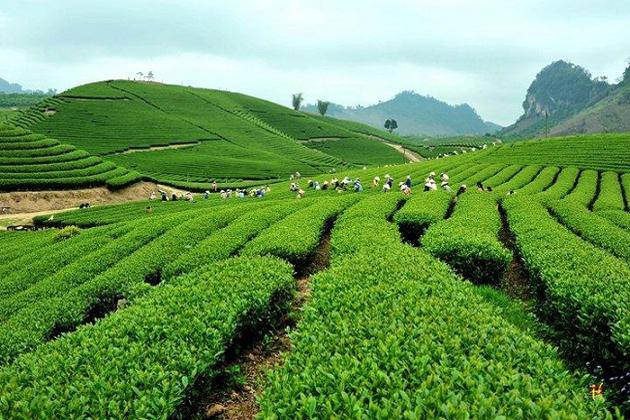 tea hill mai chau tours
