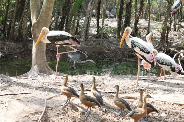 Bac Lieu Bird Sanctuary