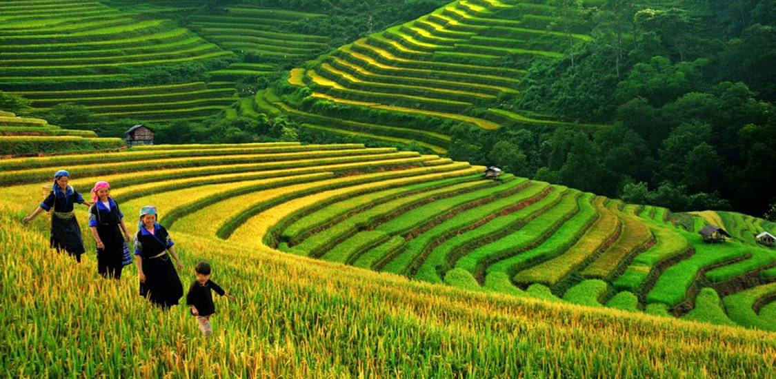 rice terraces in north vietnam vietnam vacation packages