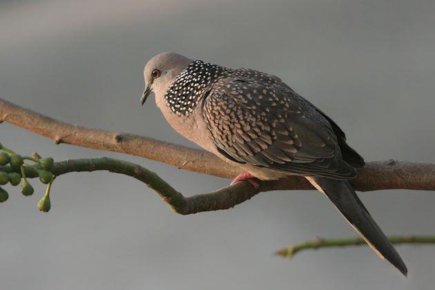 beautiful bird in nam cat tien national park