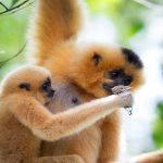 monkeys at nam cat tien national park vietnam adventure travel