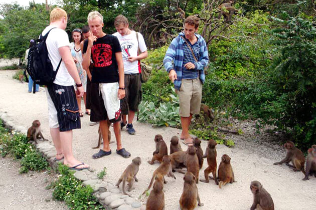 monkey island in can gio district