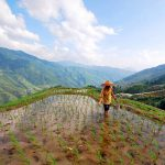 Longji Rice Terraces in guilin