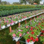 mekong delta flower garden