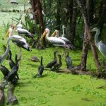 the birds living in Tra Su cajuput forest