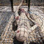 torture in phu quoc island