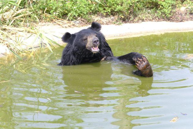 visit bear sanctuary in ninh binh