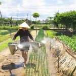 watering vegetable in hoi an farming tour