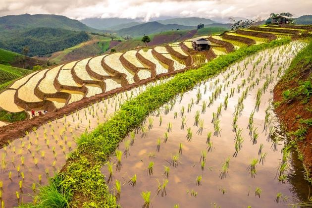 Vietnam classic tour brings you to rice terraces in sapa