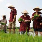 eco friendly hoi an farming tour