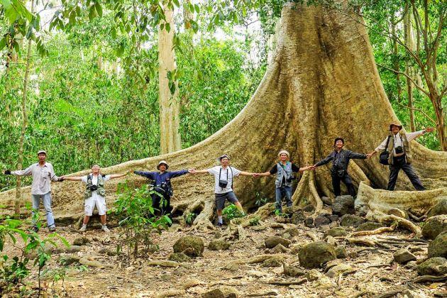 old tree at nam cat tien national park