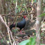rare bird specie at nam cat tien national park