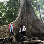 the ancient tree lives in the forest of nam cat tien national park