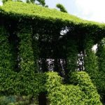 vi khe bonsai village