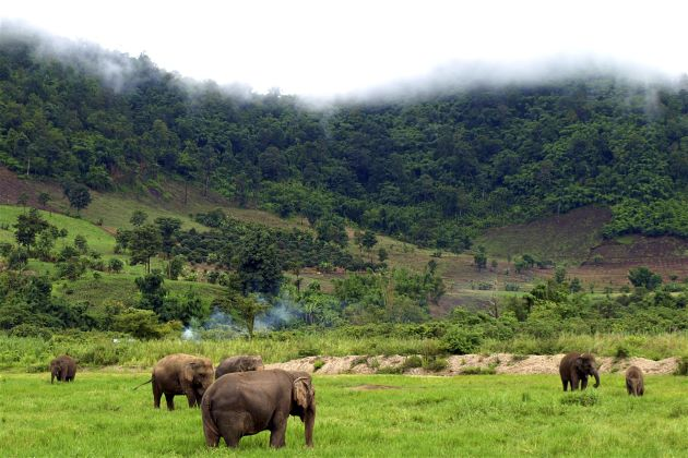Pristine Nature in Mondulkiri is worth a visit of families in cambodia family tours