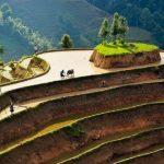 hoang su phi stunning rice terraces
