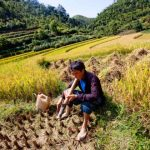 local farmer at work in ha giang
