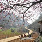local village of ethnic minorities in ha giang