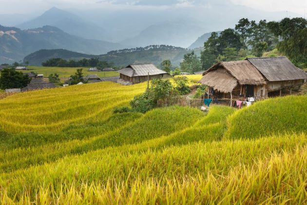 rice terraces and local houses in ha giang