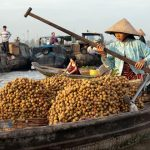 the sampan of fruits in cai rang floating market