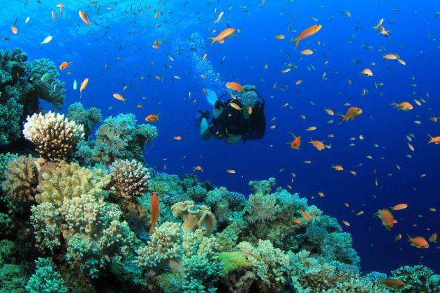 scuba diving in nha trang on vietnam beach holidays