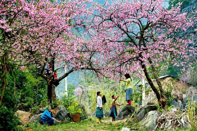 see colorful flowers in your ha giang tour