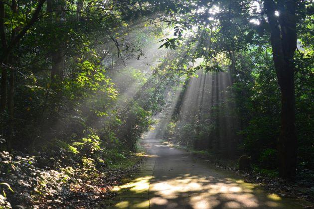 cuc phuong national park in ninh binh vietnam